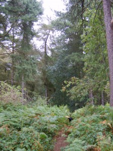 Hopwas Wood